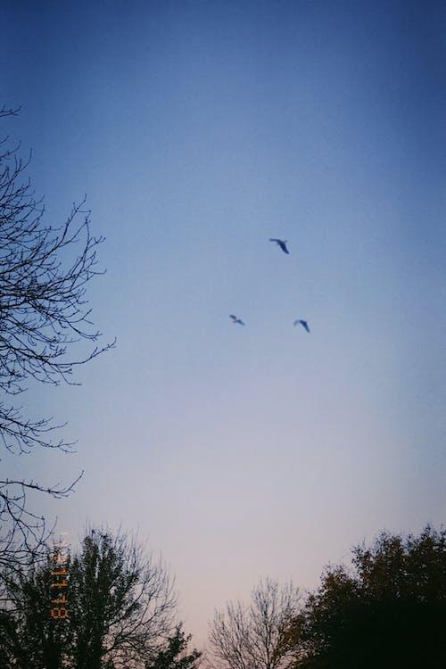 Бесплатное стоковое фото с закат, летающий, небо