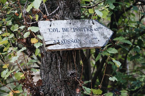 Photos gratuites de affichage, arbre, bois, feuilles