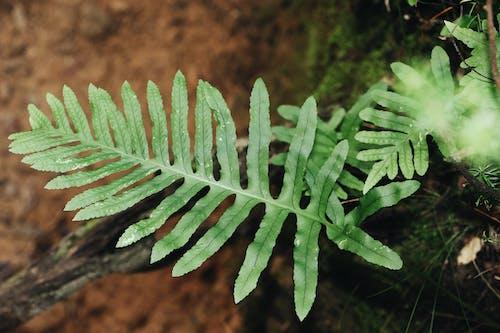 bitki örtüsü, eğrelti otu, eğreltiotu, eğreltiotu yaprakları içeren Ücretsiz stok fotoğraf