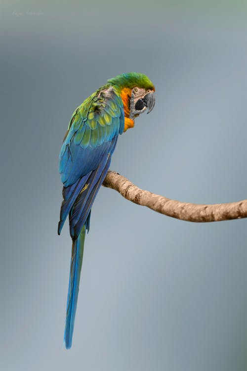 Photos gratuites de animal, animal sauvage, aviaire, faune