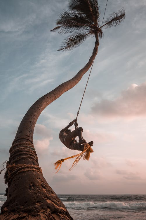 Low Angle Shot Of A Person Swinging On A Rope Tied To Coconut Tree