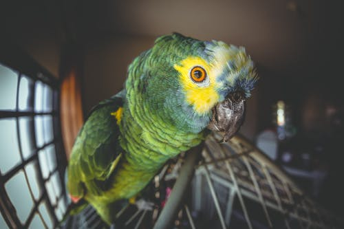 側面圖, 動物攝影, 喙, 寵物 的 免費圖庫相片