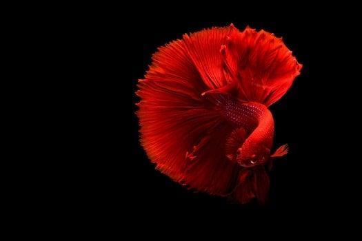 Kostenloses Stock Foto zu rot, liebe, kunst, dunkel