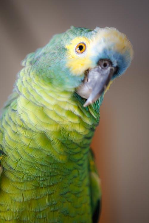 Immagine gratuita di animale domestico, becco, bellissimo, colore