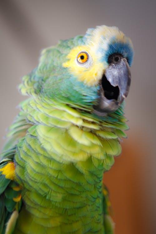Δωρεάν στοκ φωτογραφιών με άγρια φύση, ζώο, μακάο, παπαγάλος
