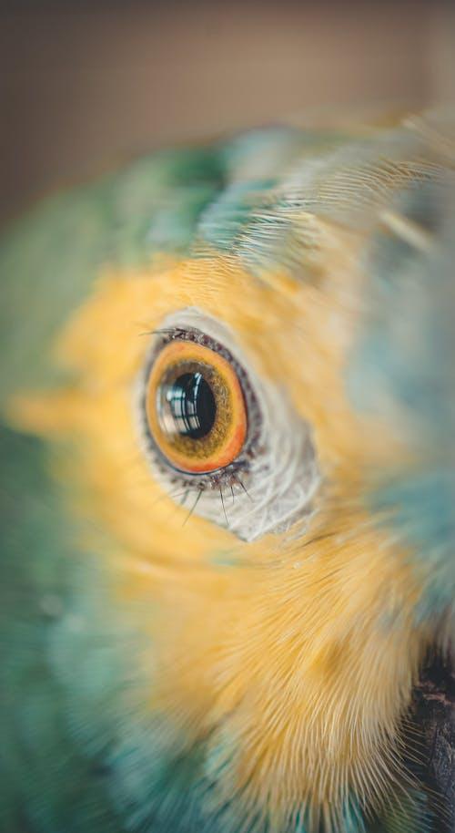 Gratis stockfoto met aviaire, beest, close-up, dieren in het wild