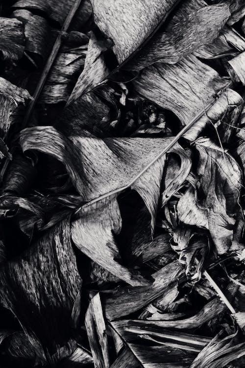 Imagine de stoc gratuită din alb-negru, artă, aspect, frunze