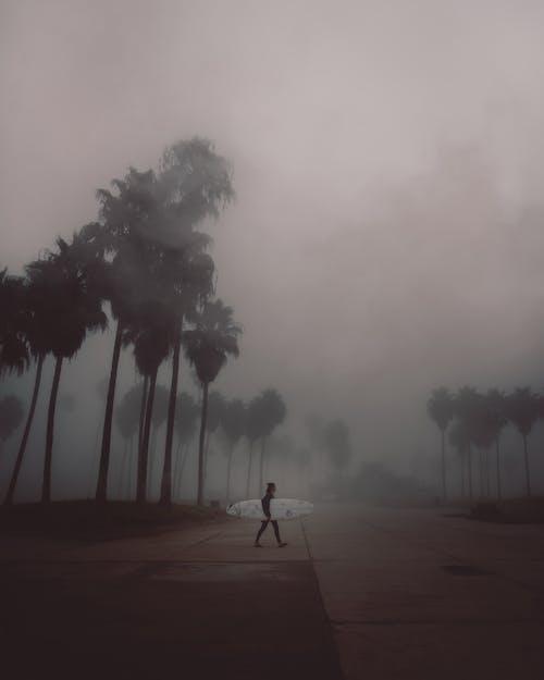 人, 剪影, 天性, 天氣 的 免费素材照片
