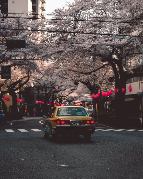 Photo Of Yellow Car Under Pink Trees