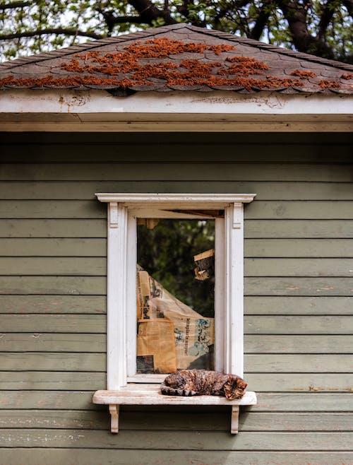 Kot Szylkretowy W Pobliżu Szklanego Okna
