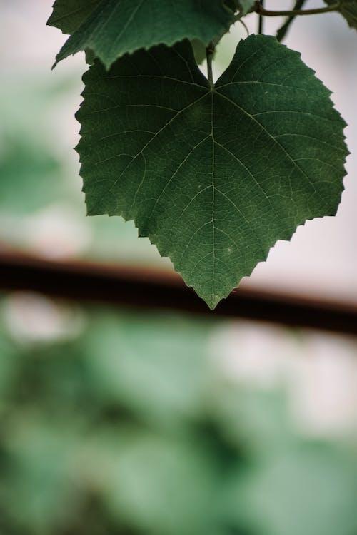 Büyük yaprak, büyük yeşil yaprak, çiçek, güz yaprakları içeren Ücretsiz stok fotoğraf