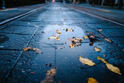 Macro Photography of Yellow Leaves on Wet Road