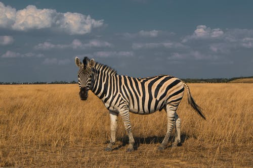 Photo Of Zebra On Grass