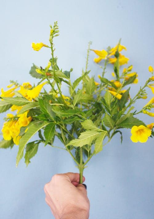Безкоштовне стокове фото на тему «букет, жовті квіти, квіти, квітка»
