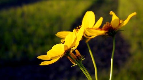 Бесплатное стоковое фото с желтый, космос