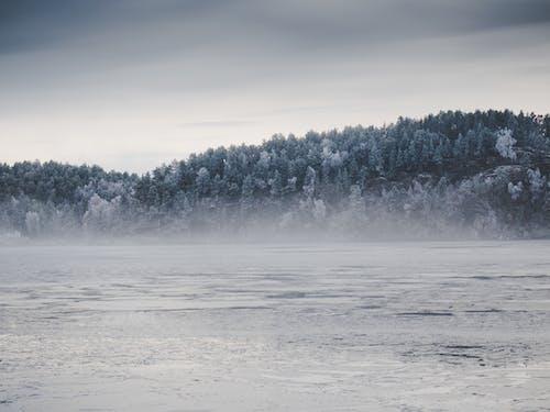 Fotobanka sbezplatnými fotkami na tému chladný, exteriéry, hmla, jazero