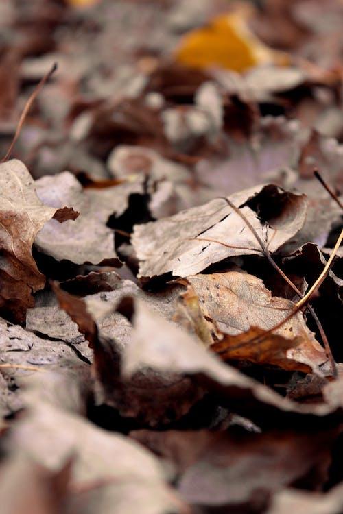 Free stock photo of autumn, autumn colors, autumn leaves, autumn mood