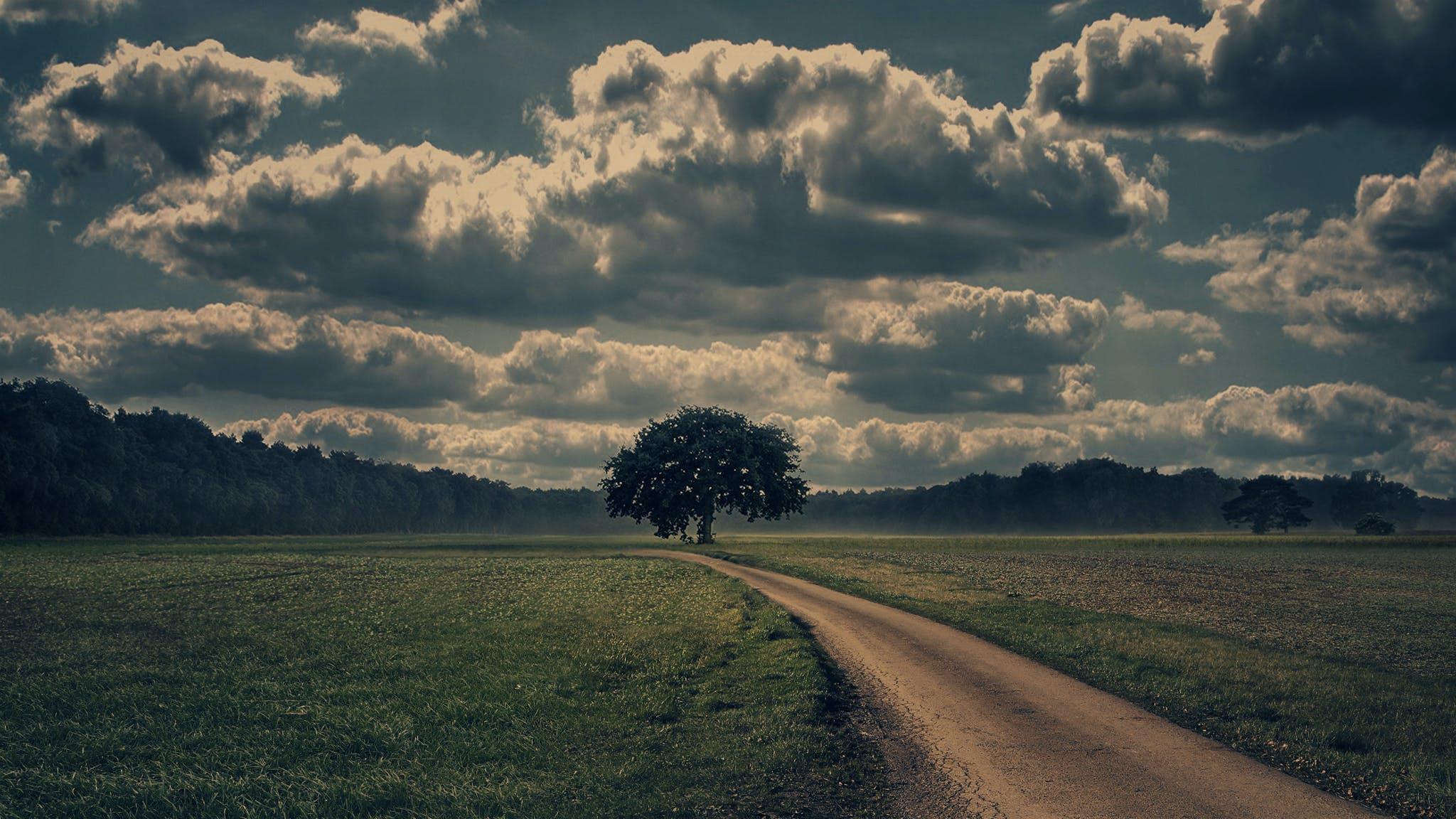 Free stock photo of landscape, tree, horizon