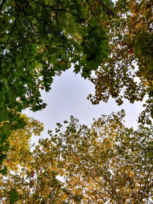 Foto d'estoc gratuïta de arbre, bosc, bosc de tardor, bosc dens