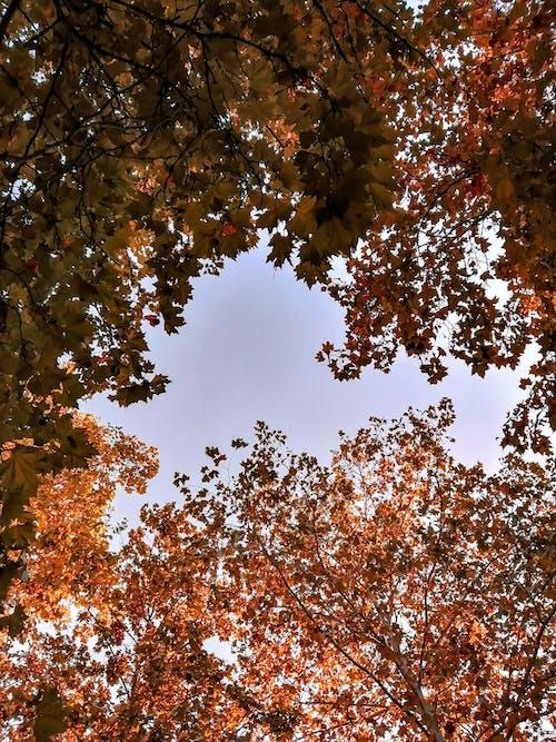 Foto d'estoc gratuïta de arbres, bosc, bosc de tardor, caure