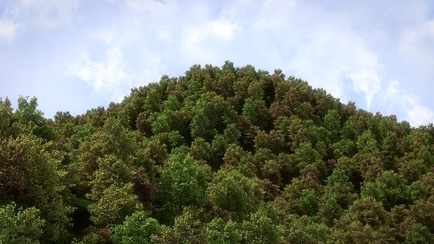 Free stock photo of forest, hill, 3d