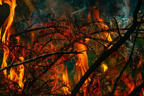 Free stock photo of camp fire, fire