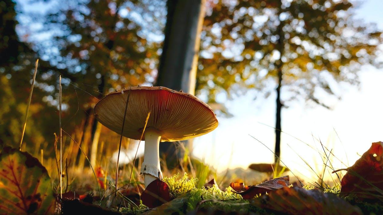 гриб, максросъемка, мох