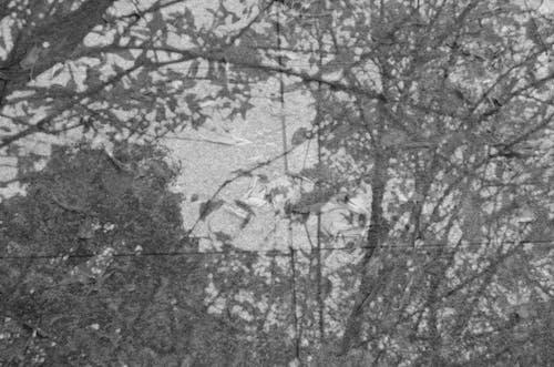 Kostenloses Stock Foto zu abbildung, bäume, drinnen, farben