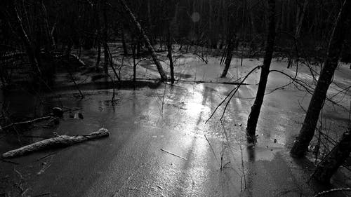 Free stock photo of black-and-white, forest, frozen lake, ice