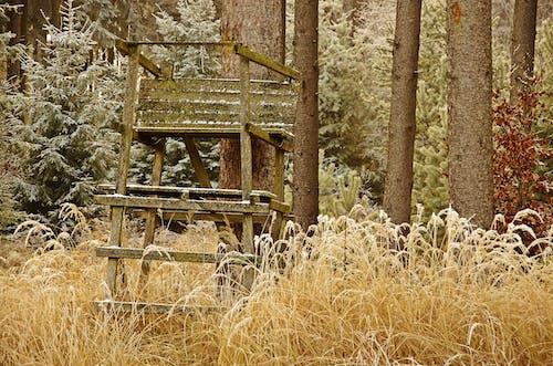 Ingyenes stockfotó dér, erdő, tél témában