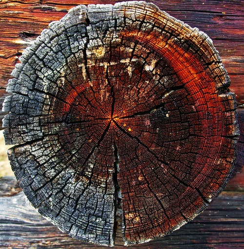 Close-up of Tree Stump