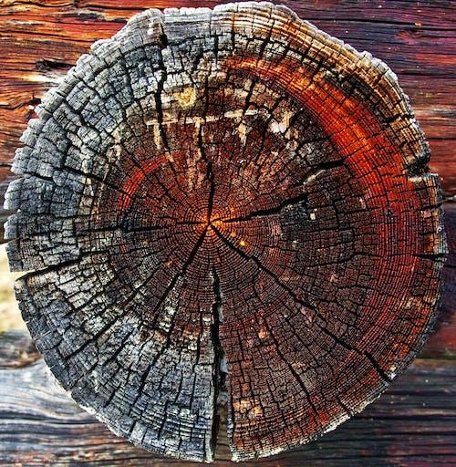 テクスチャ, トランク, 円形, 木の無料の写真素材
