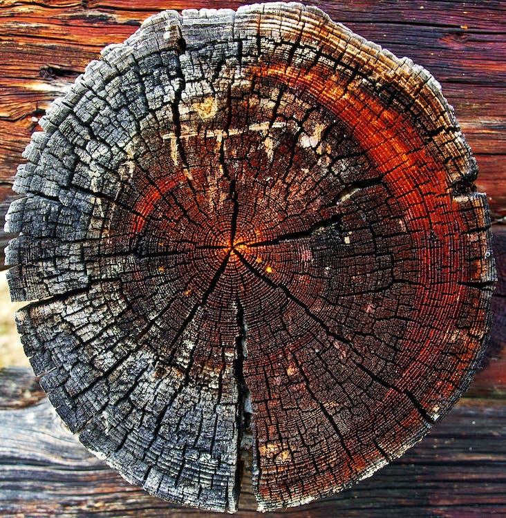 drevený, drevo, kmeň