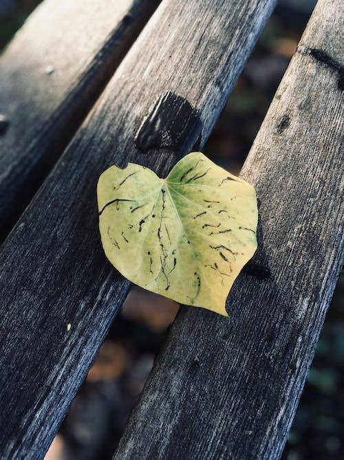 Green Heart-shape Leaf on Wood