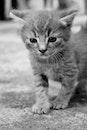 pet, cute, eyes
