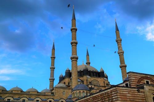 คลังภาพถ่ายฟรี ของ ท้องฟ้า, นก, มัสยิด, ศาสนา