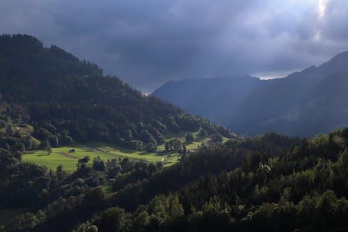 Fotos de stock gratuitas de amanecer, arboles, bosque, colina