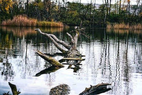 Ingyenes stockfotó a víz színe, anyatermészet, áramlási víz, az ősz színei témában