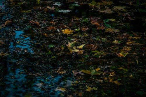 ダーク, テクスチャ, 乾いた葉, 地面の無料の写真素材