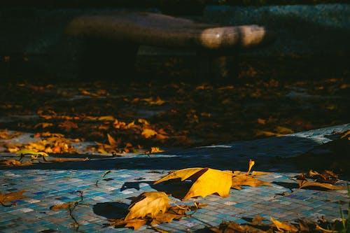 乾いた葉, 屋外, 日光, 楓の葉の無料の写真素材