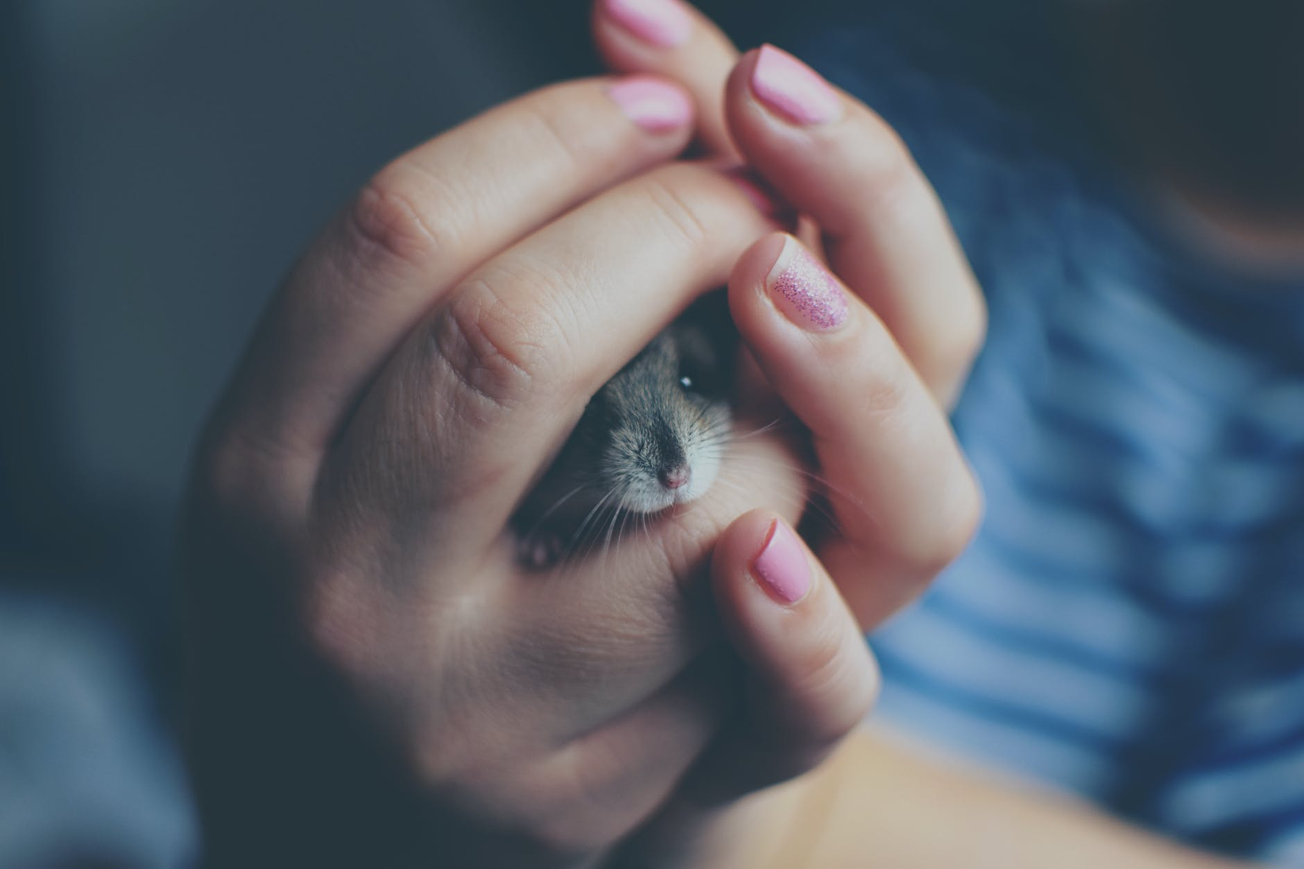 a hamster inside the hands of a woman