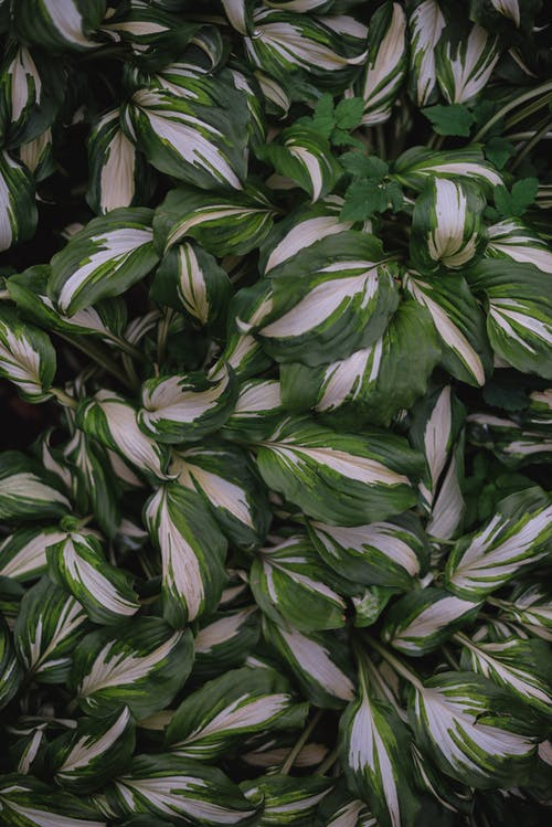 Top-view Green and White Leaves