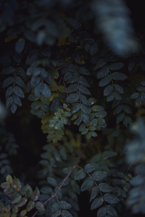Foto stok gratis alam, Daun-daun, dedaunan, hijau