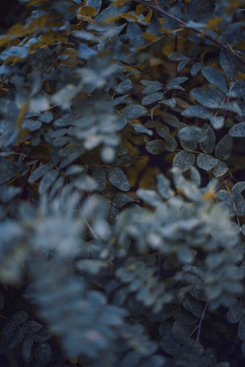 Free stock photo of 4k wallpaper, blue, close-up, color