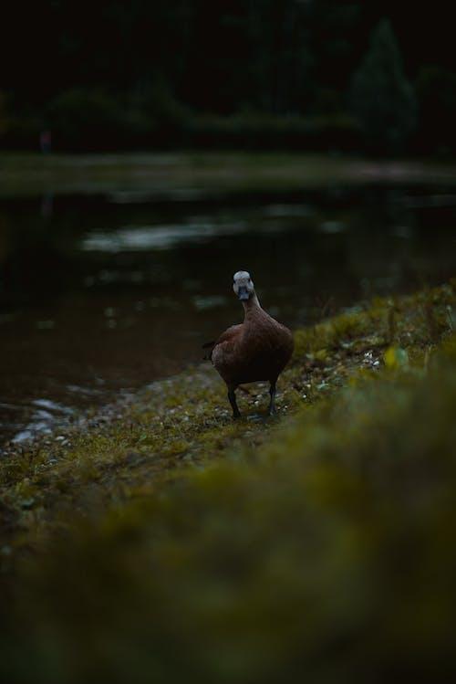 Free stock photo of animal, bird, close-up, dawn