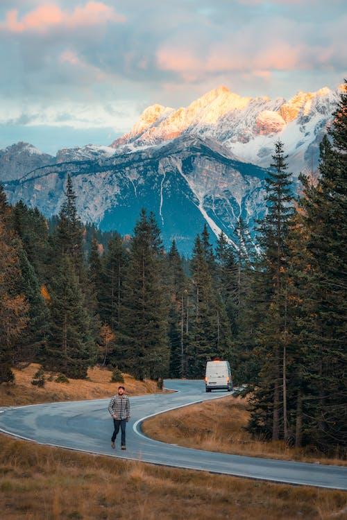 hora, jehličnany, krajina