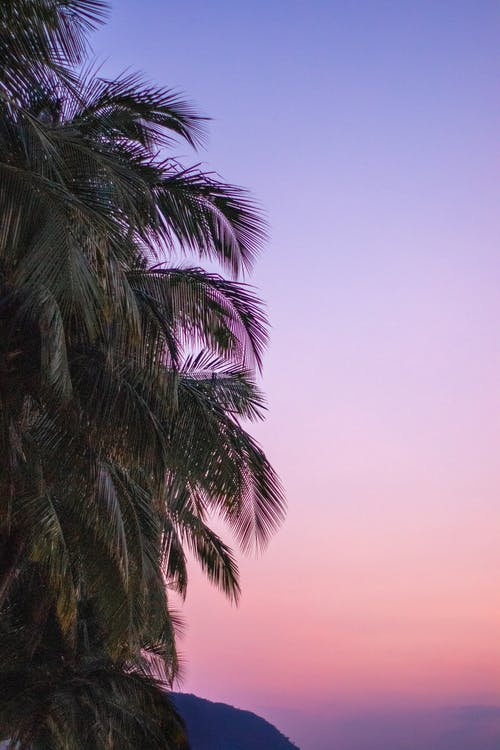 Imagine de stoc gratuită din cer aprins, palmier, violet apus de soare