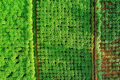 공중 촬영, 농업, 드론, 드론 캠의 무료 스톡 사진