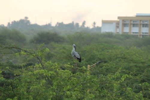 Základová fotografie zdarma na téma ptáci, pták, rajky