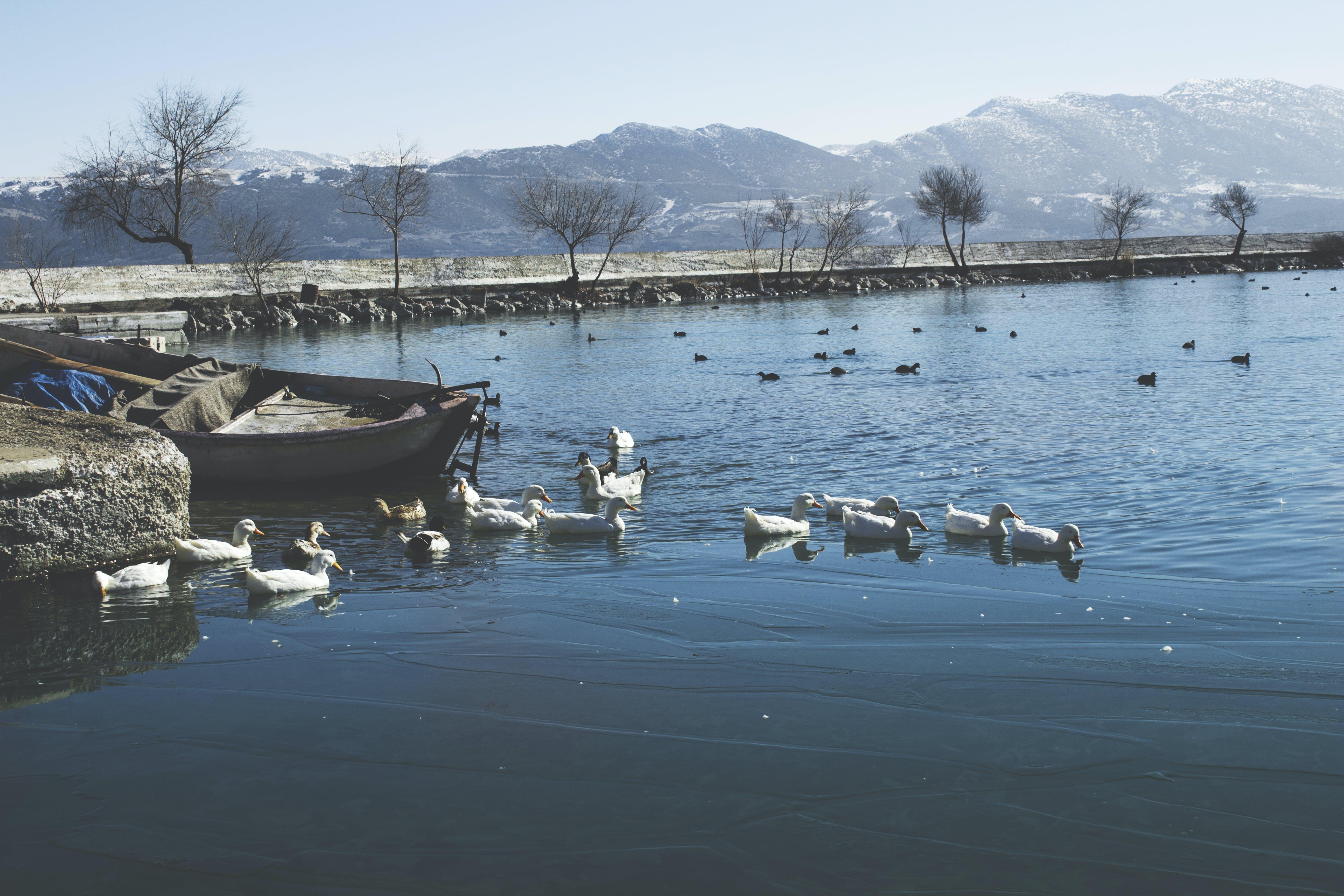avian, birds, boat